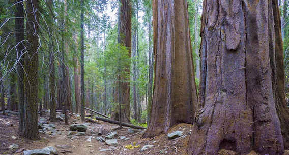 Nelson Trail through the Wheel Meadow Grove