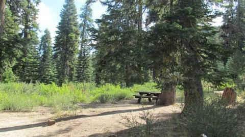 Quaking Aspen Campground Site