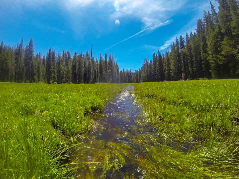 Log Cabin Meadow in the Golden Trout Wilderness