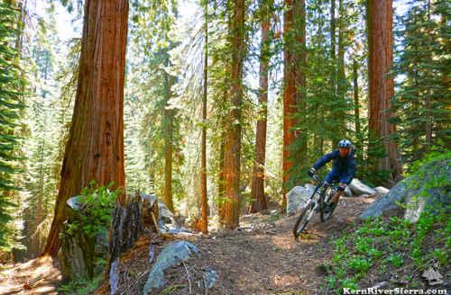 Mountain Biking the Freeman Creek Trail is a Popular Option