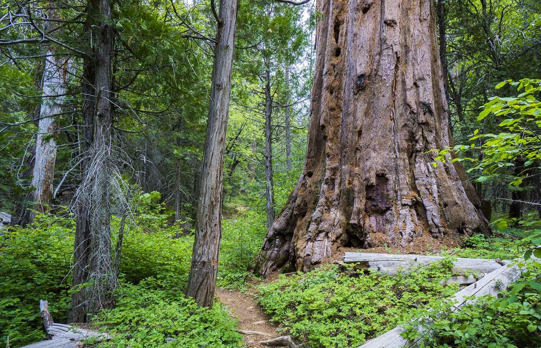 Nelson Trail through the Belknap Camp Grove