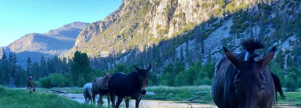 Pack Horses in the Golden Trout Wilderness