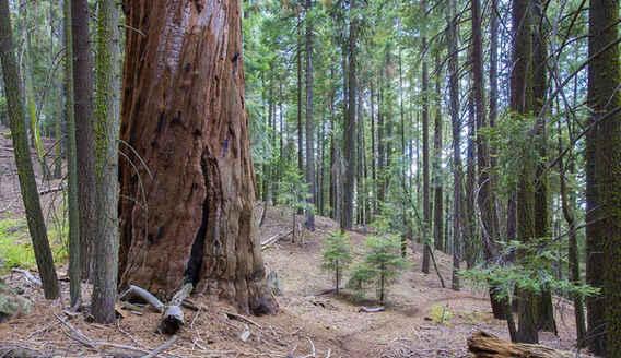 The Bear Creek Trail
