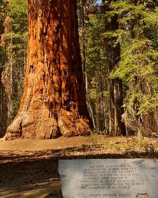 President Bush Tree on the Freeman Creek Trail
