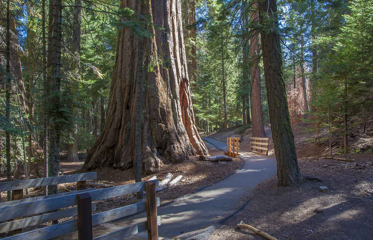 The Trail of 100 Giants is Fully Accessible