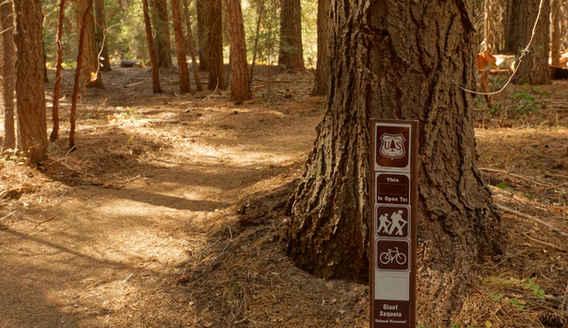 The Freeman Creek Trail Is by Ponderosa