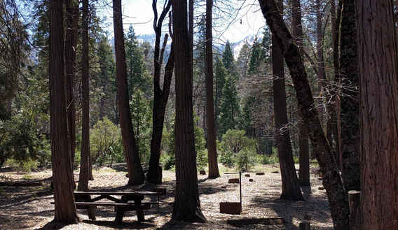 Coy Flat Campground Site