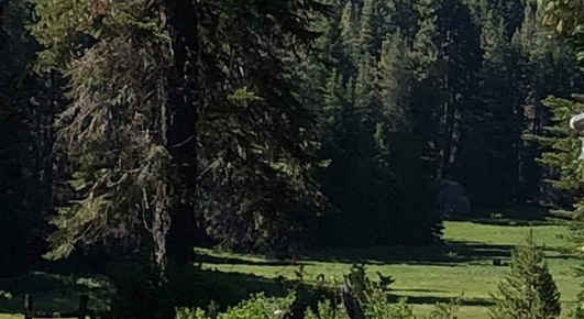 One of several meadow areas in Ponderosa