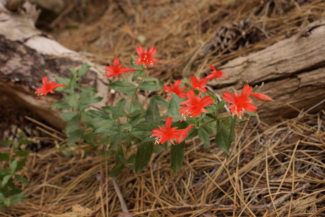 Freeman Creek Trail Flowers