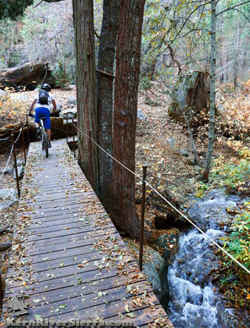 Bear Creek Trail Log Bridge