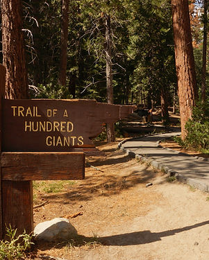Trail of 100 Giants Sign