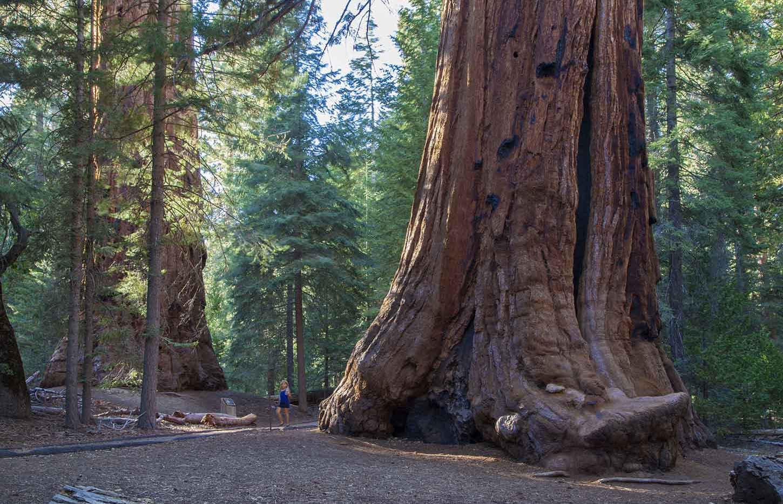 Trail of 100 Giants Giant Sequoia Base