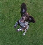 Barney by drone 3.png