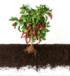 Erde Humus Gemüse Spezial Mischung