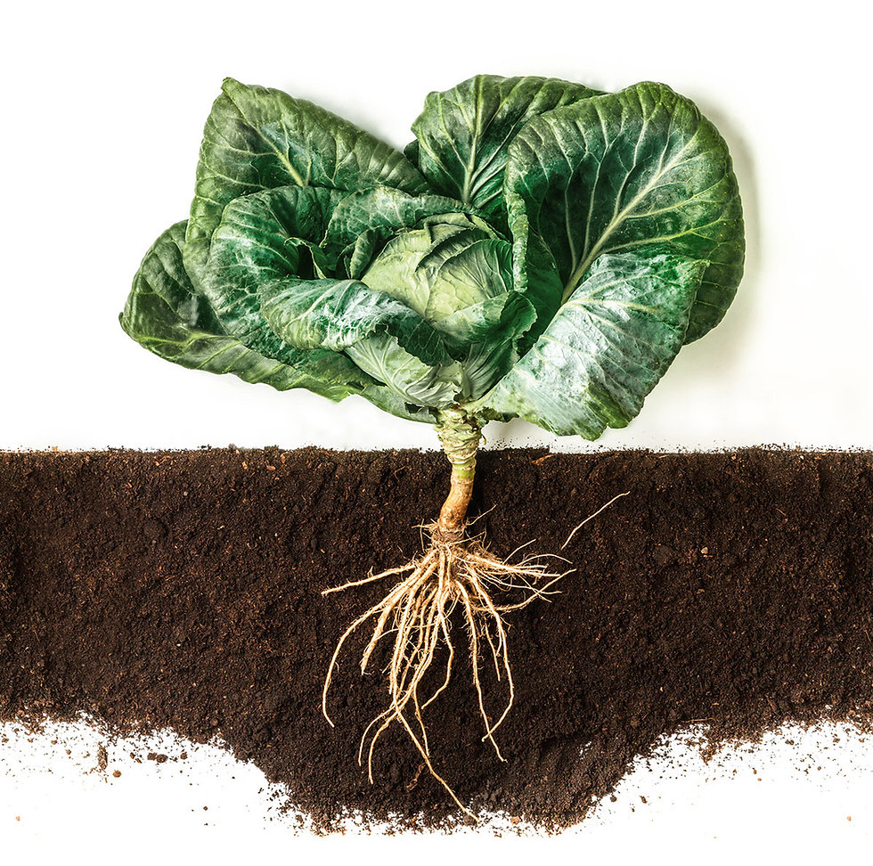 Erde Humus Garten Gartenerde Gemüse