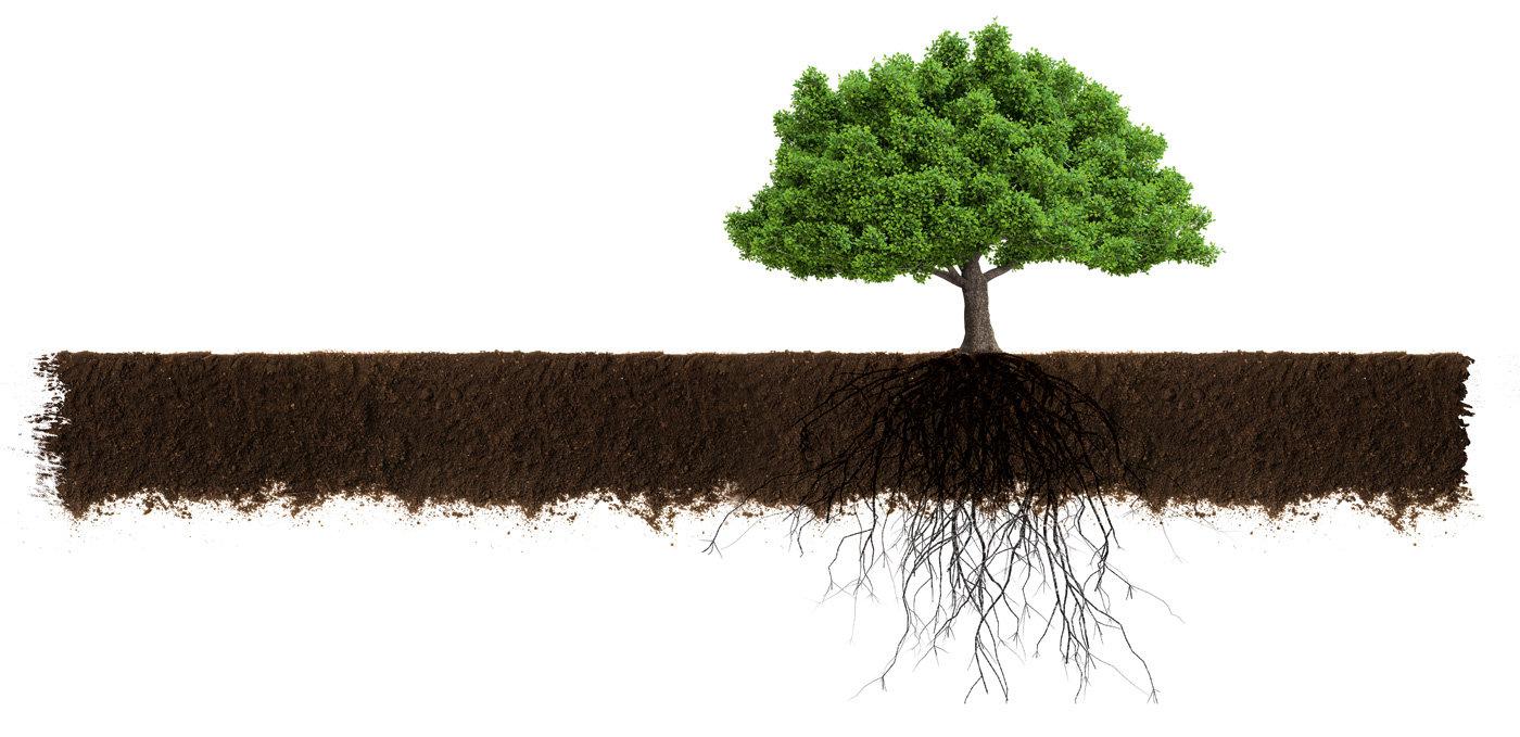 Erde Baum Wachstum