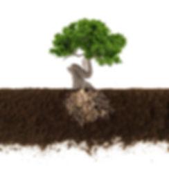 Erde Humus Baum Wiese Garten