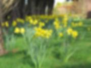 mandalay garden georgeham north devon