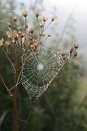 spider-1703964_960_720.jpg