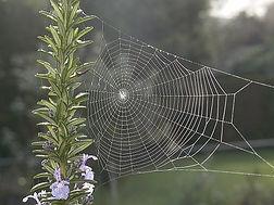 spiderweb-841610__340.jpg