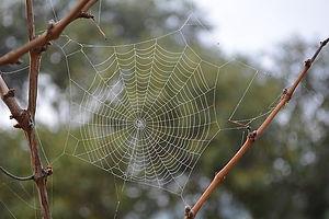 cobweb-1822774__340.jpg
