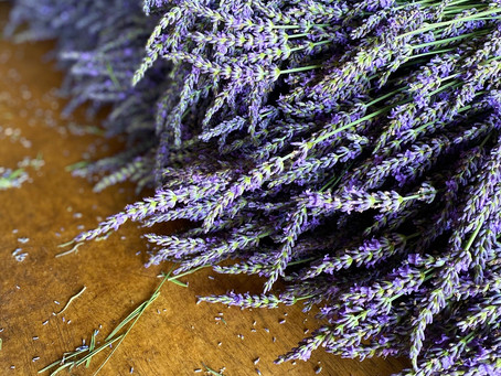 Lavender is HERE!