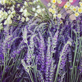 Chamomile & Lavender