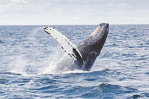 Whale-Watch-Plymouth-image-1.jpg