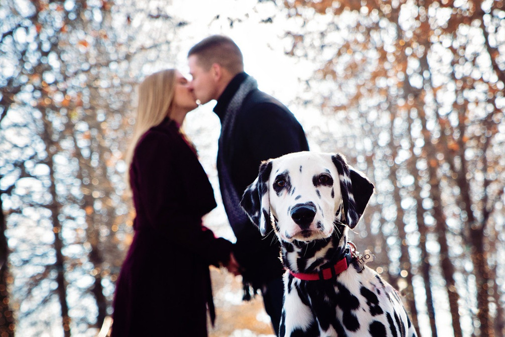 Engagement with dalmation