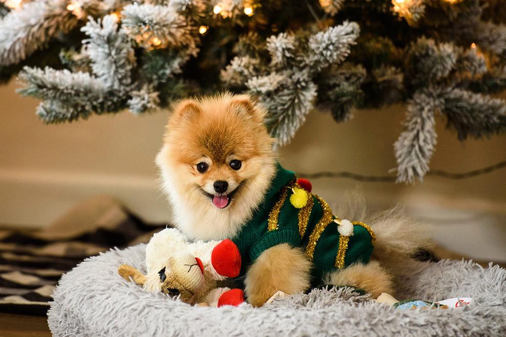 Litte Christmas Dob