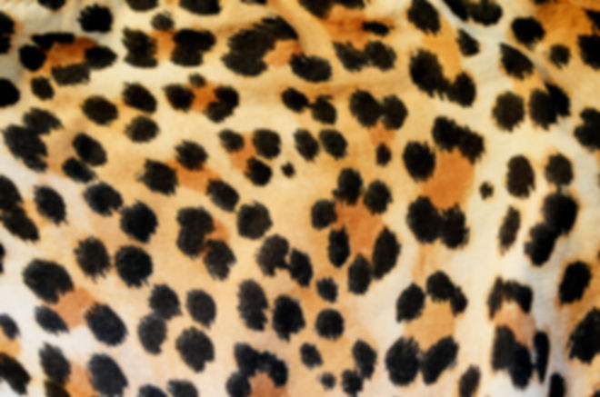 leopard-print-wallpapers.jpg
