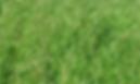 Cebadilla Rosalia Inta, semillas, pasturas, alfalfa, sorgos híbridos, grama rhodes, brachiaria, subtropiales, gramíneas, leguminosas, rye grass