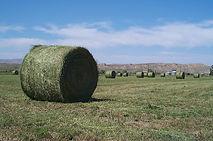semillas, pasturas, alfalfa sequel HR, sorgos híbridos, grama rhodes, brachiaria, subtropiales, gramíneas, leguminosas, rye grass