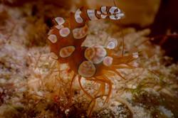 Shrimp-6330