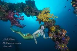 Mermaid Bonnie -9081