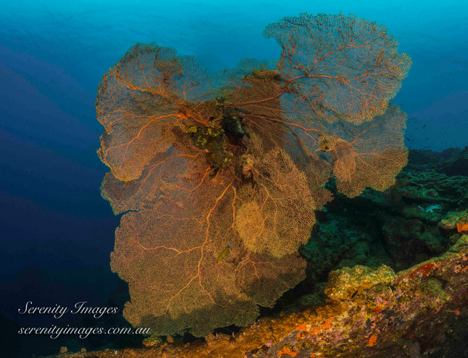 Bonegi 3 Solomon Islands