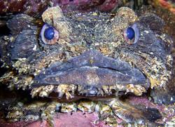 Frog Fish & Babies SI-1