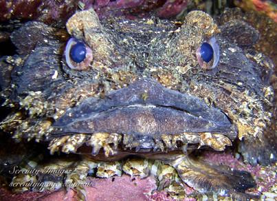 Frog Fish & Babies SI-1.jpg