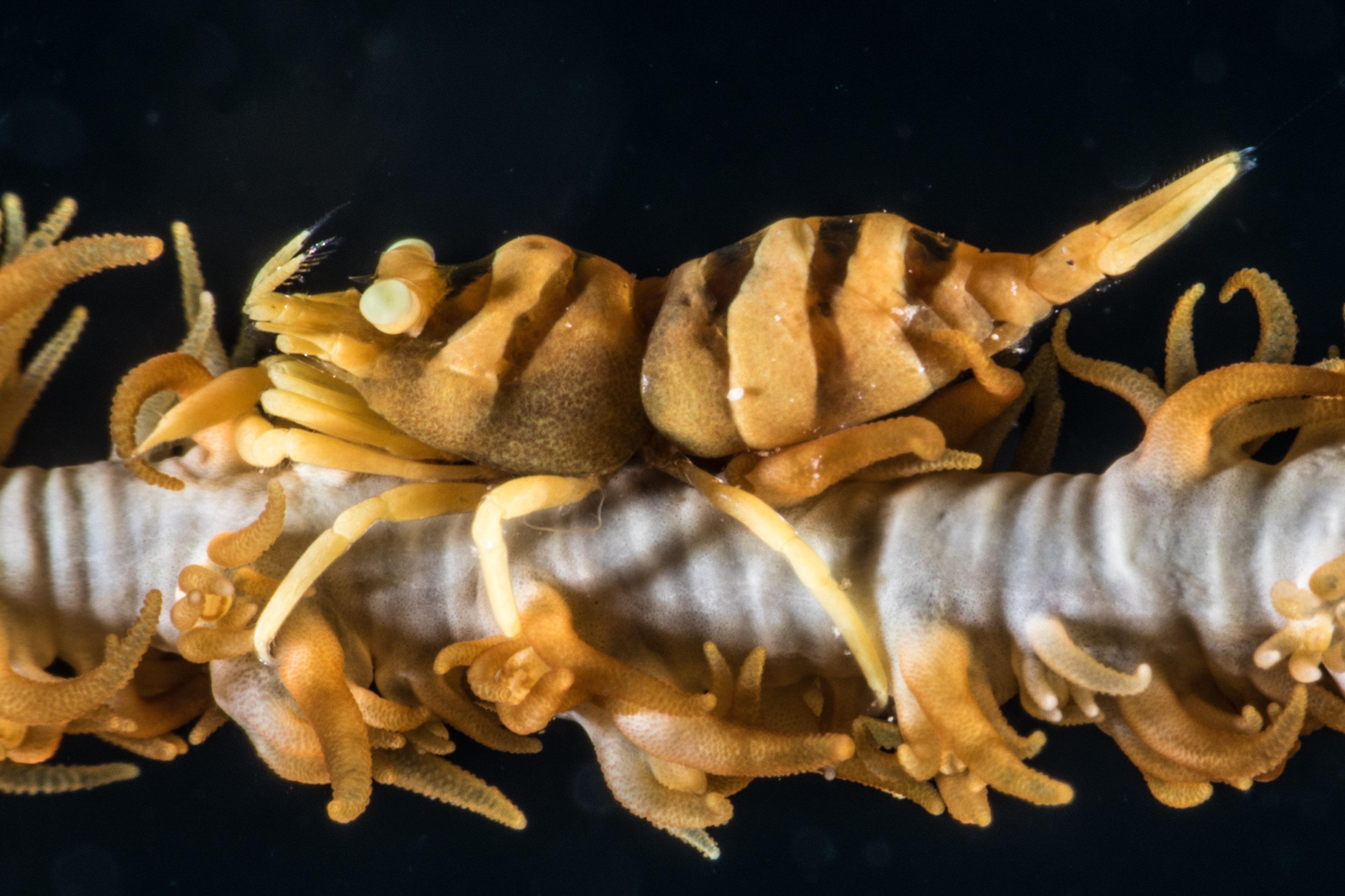 Shrimp-4884