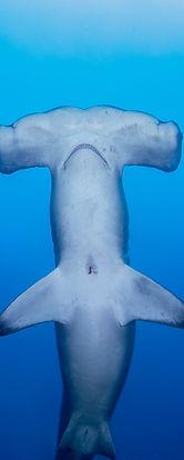 Shark-9992.jpg