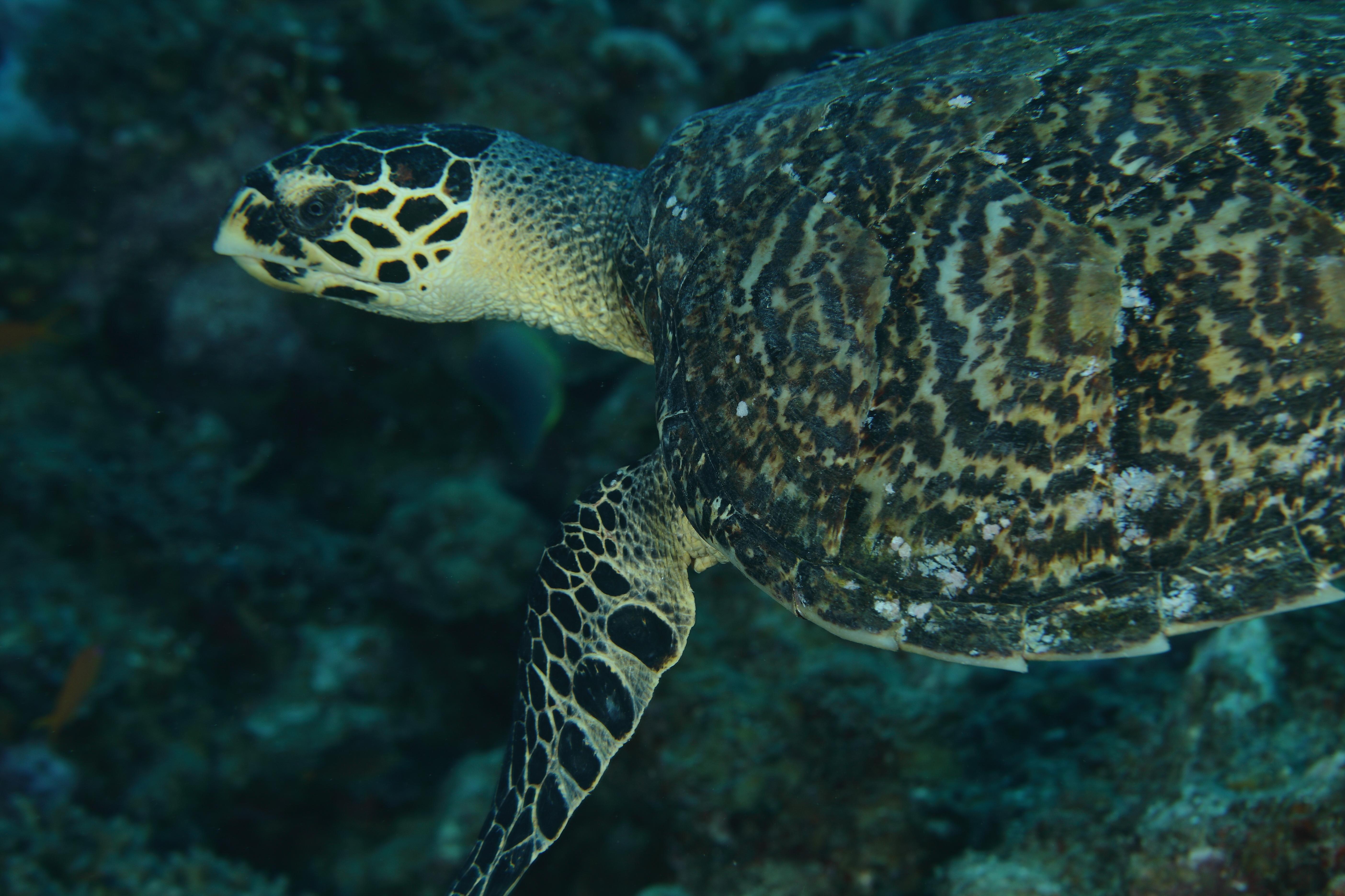 Turtle_1824-001