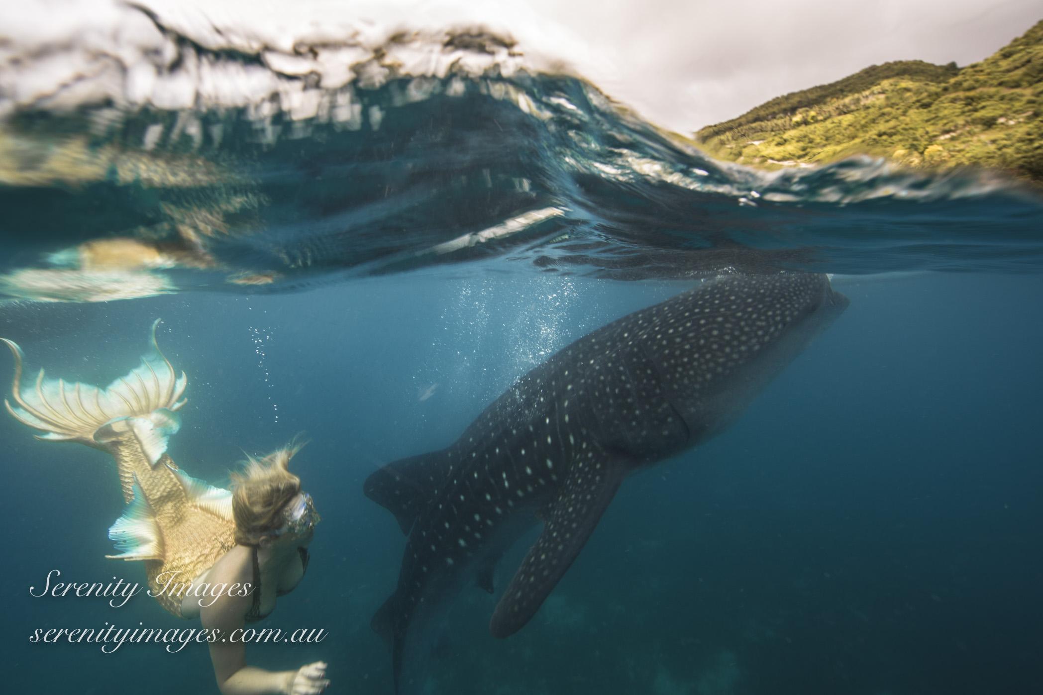 Mermaid Bonnie Wale Shark SI-7608
