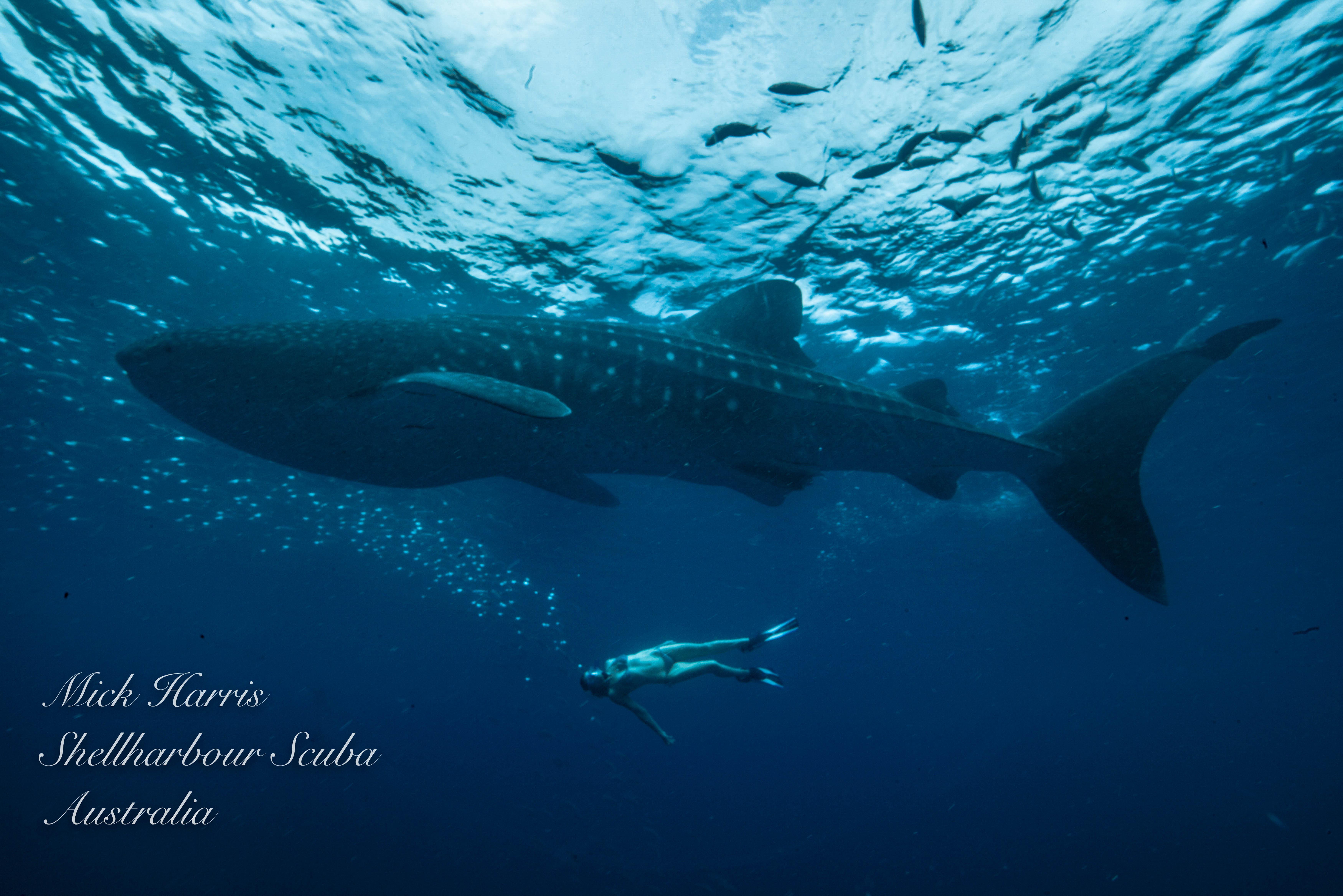 Bonnie Wale Shark 4823-4823
