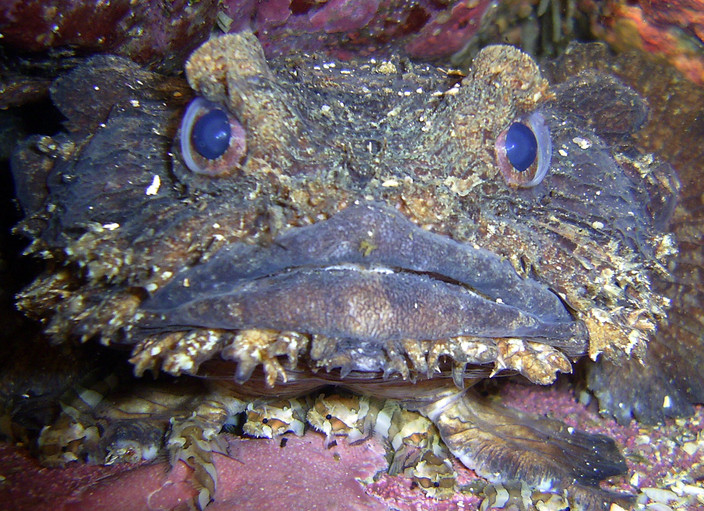 Bass Point Frog fish1.jpg