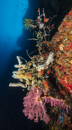 Reef-5096