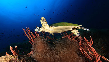 Turtle_8562-001.jpg