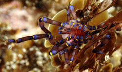 Blue Spider_3106-001