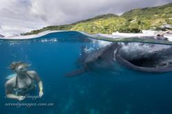 Mermaid Bonnie Wale Shark SI-7374