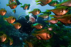 School of Bullseye and Divers