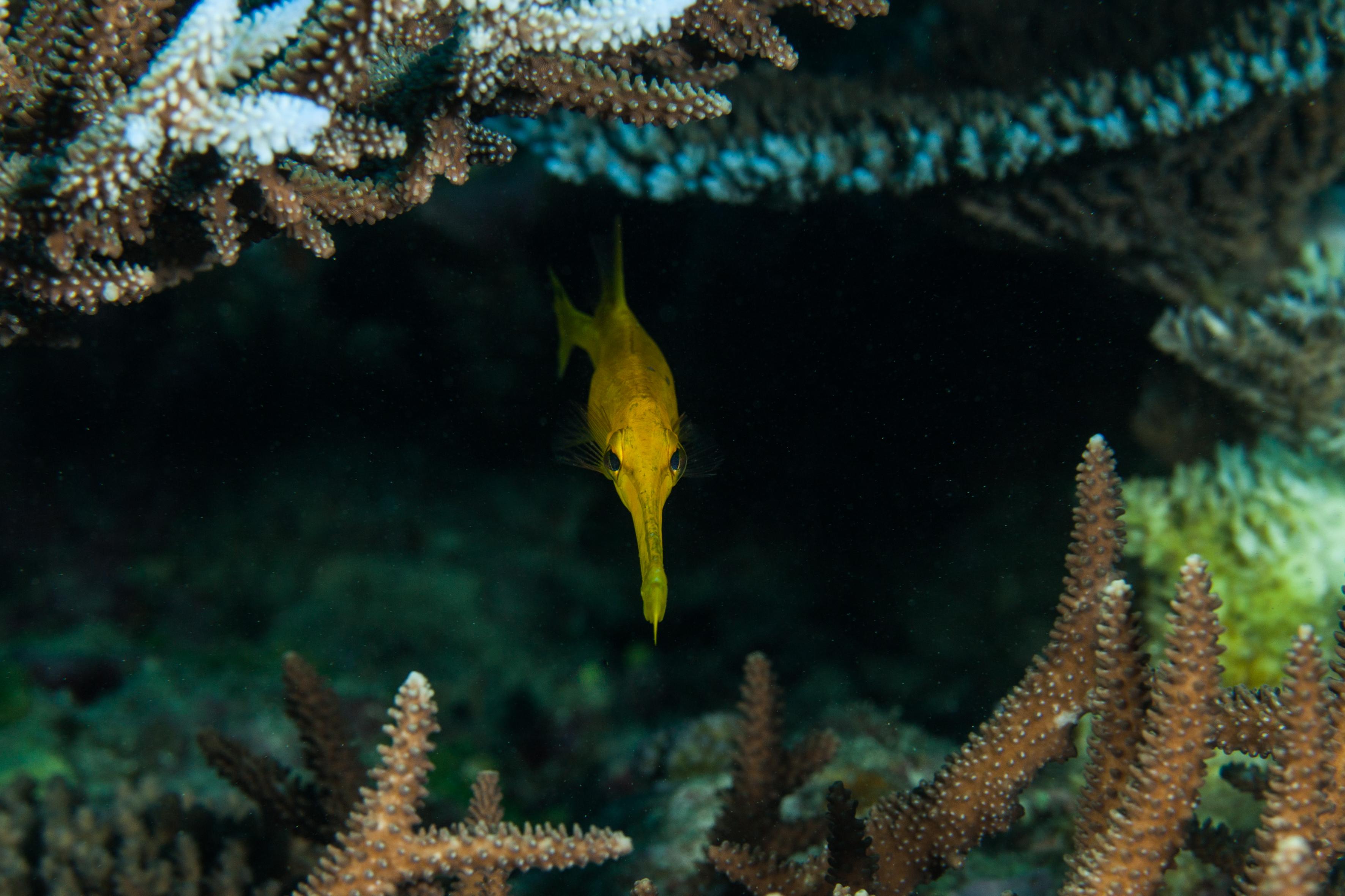 Pipe Fish-8282